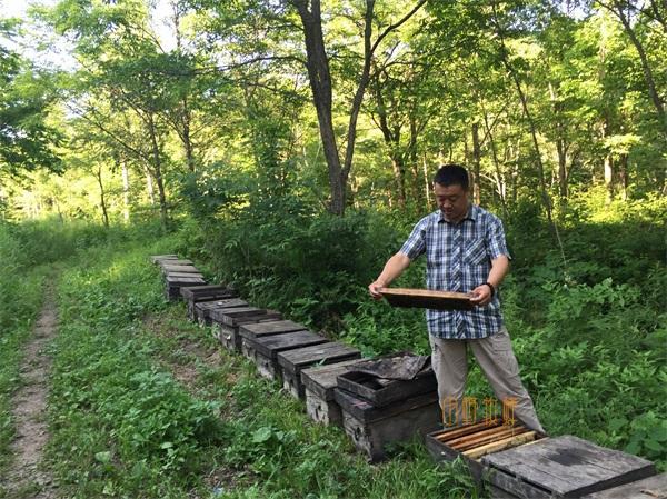 椴树蜜30一斤是好的吗,椴树蜜是怎么做的? 健康 第2张